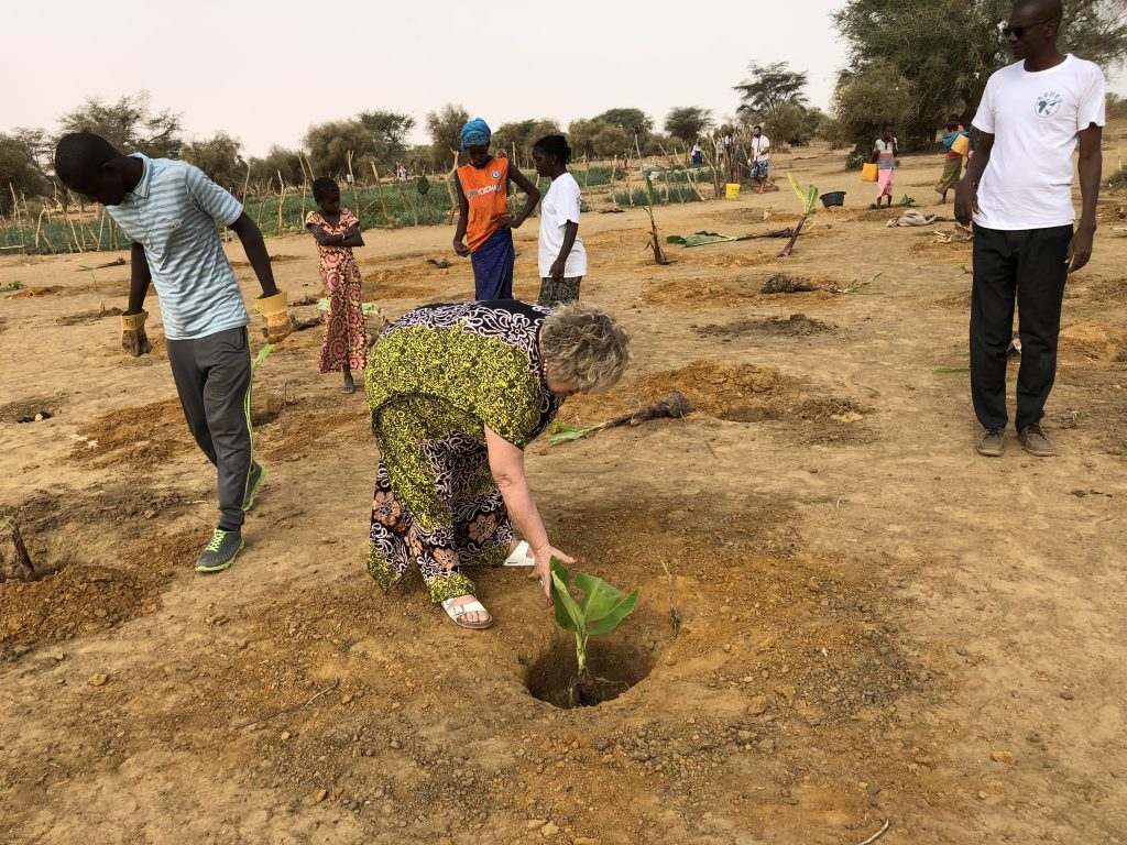 Pellicano helps to plant mango plants for the reforestation of Senegal in the community of Guédé Chantier